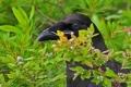 Raven 001