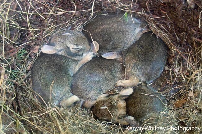 Bunnies 002